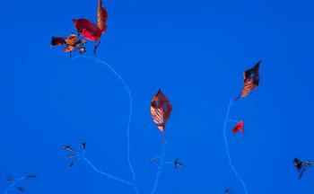 枯葉のアート